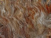 Brown Fluffy Abstract Background.