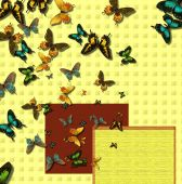 Butterfly breakout stationery poster