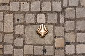 Saint James Shell Symbol