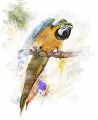 Watercolor Digital Painting Of  Colorful Parrot