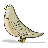 cartoon common bird