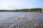 Flying Seagulls At Bangpoo, Thailand