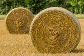 stock photo of threshing  - Agricultural landscape of corn field and threshed hay bales - JPG