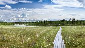 River Swamp With Cotton Grass And Wooden Planks