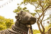picture of shiva  - closeup of face of Nandi  - JPG