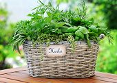 basket with herbs
