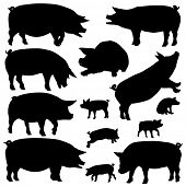 Set of editable vector silhouettes of pigs and piglets