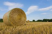 pic of hay bale  - Agricultural landscape and hay bales in  wheat field - JPG