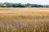stock photo of marsh grass  - Golden marsh grasses in the winter wetlands - JPG