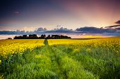 Fantastic field at the dramatic overcast sky. Ukraine, Europe. Beauty world.