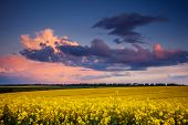 Fantastic field at the dramatic overcast sky. Dark ominous clouds. Ukraine, Europe. Beauty world.