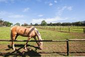 Horse Equstrian Animal