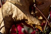 Crisp Dried Leaf In Autumn