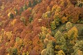 Autumn Forest In La Garrotxa