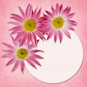 Aster Flowers And A Round Frame