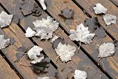 Fallen Leaves On Wet Board