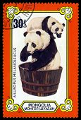 Vintage  Postage Stamp. Female And Cub In Washtub.