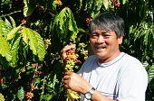 Asian Farmer, Coffee Bean Plantation, Vietnam Agriculture