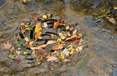 picture of underground water  - drain filled with autumn leaves and water - JPG