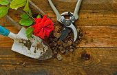 Gardening Tools On Rustic Wooden Boards