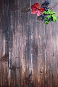 Wood And Leaf
