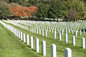 picture of arlington cemetery  - White Headstone rows at Arlington National Cemetery - JPG