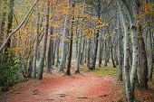 Colorful autumn forest fall colors