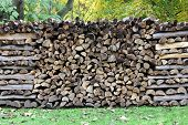 log pile in the forest
