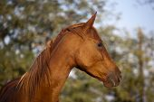 Peaceful Mare Horse Head Shot Side View Summertime