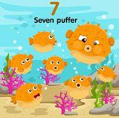 Illustrator of number seven puffer