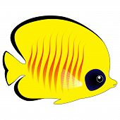 Cute Yellow Butterfly Fish