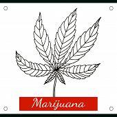 Sketch of marijuana isolated on white background.