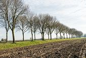 Row Of Bare Trees Along A Plowed Field