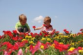 baby and child in flowers