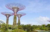 SINGAPORE - JULY 14, 2014: The Supertree Grove at Gardens by the Bay. One of the most popular tourist destinations in Singapore