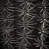 stock photo of thorns  - Close up of cactus thorn - JPG