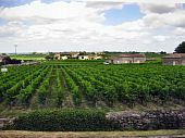 Bordeaux Vineyards