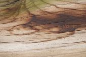 pic of algae  - Rustic and weathered wood surface with algae background - JPG