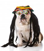 picture of dreadlocks  - funny dog with dreadlock wig and peace glasses on white background - JPG