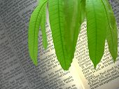 Bible Is Decorated By Mango Leaves.
