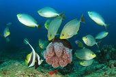 foto of jellyfish  - Fish feeding on jellyfish - JPG