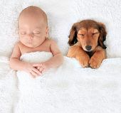 stock photo of sleeping baby  - Sleeping newborn baby alongside a dachshund puppy - JPG