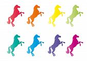 Horses in color