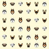 ������, ������: Yellow Background With Dogs Of Various Breeds