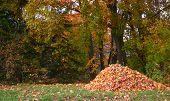 Pile of fallen leaves in a yard.