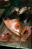 picture of yucky  - A display of fish heads from an market in Honolulu - JPG