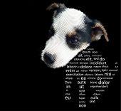dog, vector banner
