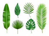 Tropical Plants. Exotic Eco Nature Green Leaves Vector Realistic Collection Isolated. Exotic Green L poster