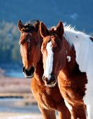 stock photo of horse face  - wild horses - JPG