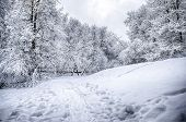 Dramatic Winter Snow Landscape Forest Snow On Branches Vignetting Hdr Photo  poster